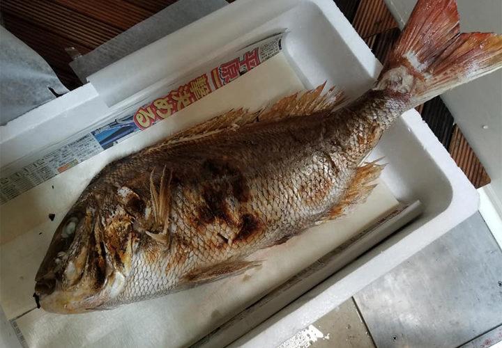 人生初の焼鯛、4.6kgサイズ
